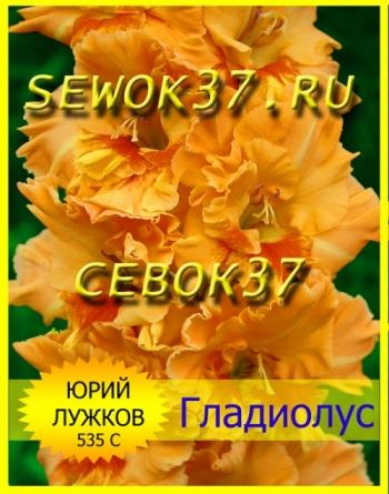 гладиолус ЮРИЙ ЛУЖКОВ