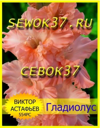 гладиолус ВИКТОР АСТАФЬЕВ